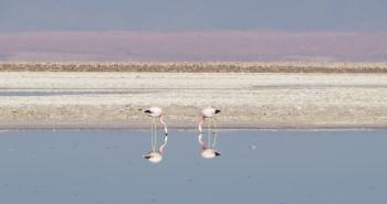 Salar do Atacama - Deserto do Atacama